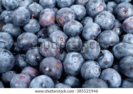 Background of blackberries - stock photo