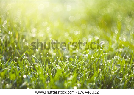 Background of blurred fresh green grass. Beautiful bright sunny spring morning. Abstract nature background with rounded pearl water-drops. Soft focus image. - stock photo