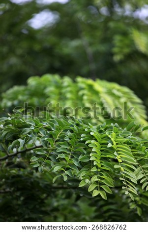 Background of bright green leaves - stock photo