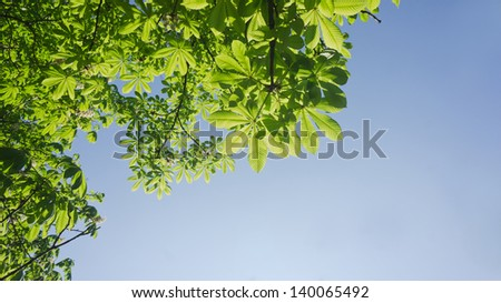 Background of chestnut tree green foliage in front of the sky - stock photo