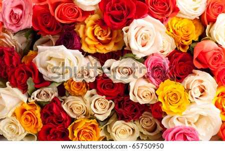 Background of colorful roses - stock photo