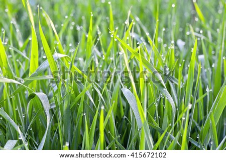 background of dew drops on bright green grass - stock photo