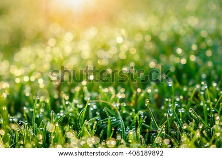 background of dew drops on bright green grass with sun beam. Bright natural bokeh. Soft focus. Abstract creative background . small depth of field - stock photo