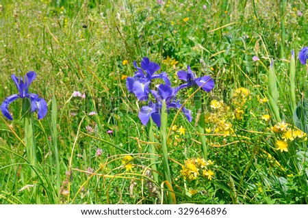 background of different herbs and flowers of iris - stock photo