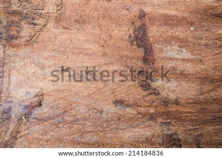 Background of dry teak texture, Close up - stock photo