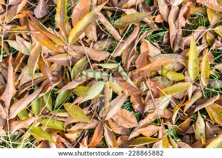 Background of fall  leaves texture - stock photo