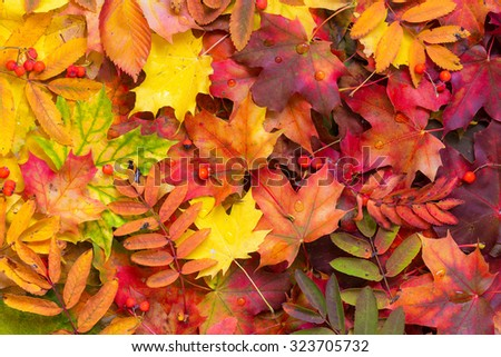 Background of fallen autumn leaves. - stock photo