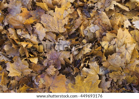 Background of fallen leaves, lying just beneath my feet.