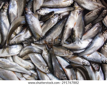 Background of fresh fish - stock photo