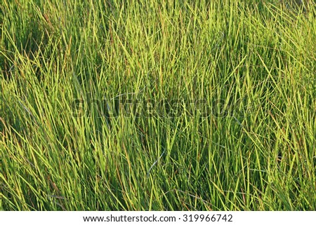 Background of fresh grass, shallow depth of field - stock photo