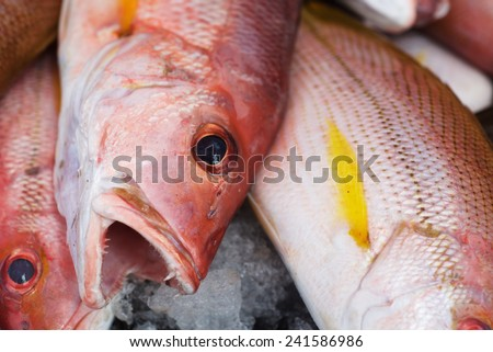 Background of fresh red sniper fish on the Asian fish market