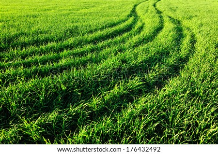 Background of fresh spring green grass closeup