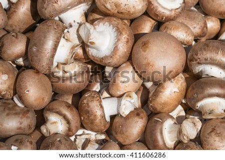 Background of fresh whole champignon mushroom - stock photo
