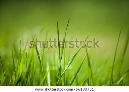 Background of freshly grown sprouts of grass, shallow depth of field
