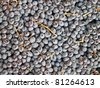Background of freshly picked muscat grapes. - stock photo
