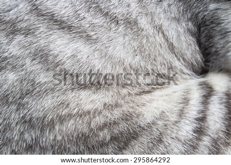 background of fur cat at the park - stock photo