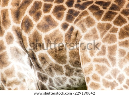Background of giraffe skin - stock photo