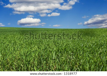 Background of green field and blue sky