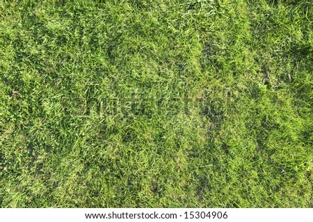 Background of green grass.