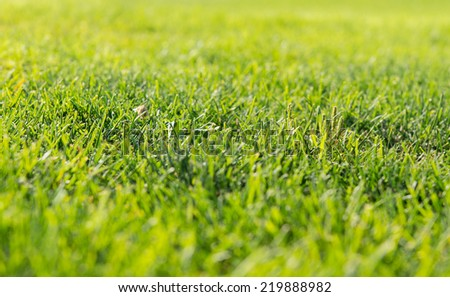 Background of green grass in a meadow or garden lit by the sunshine with shallow dof for an organic, eco or bio concept - stock photo