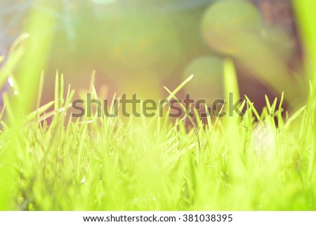 Bright Grass Green Bokeh