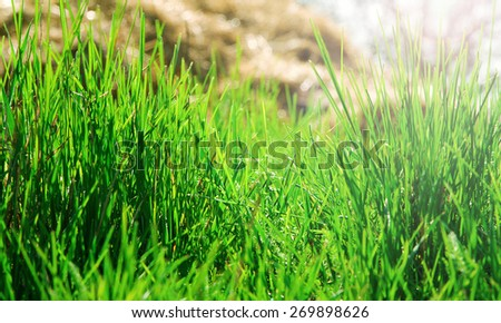 background of green grass in the background hay - stock photo