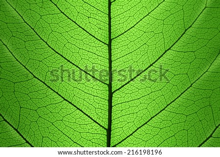 Background of Green Leaf cell structure - macro shot, natural texture - stock photo
