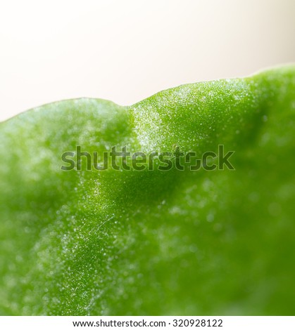 background of green leaf. super macro - stock photo