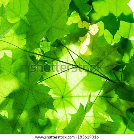 background of green leaves close-up - stock photo