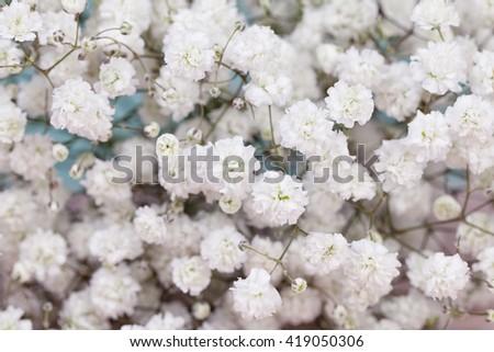 Background of gypsophila (baby's-breath) flowers - stock photo