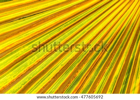 background of harmonic palm trees with shadow
