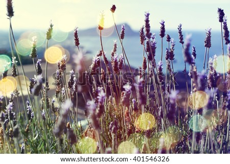 Background of lavender flowers. - stock photo