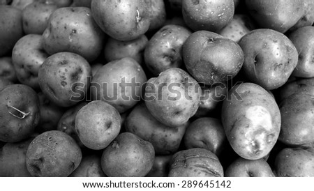 Background of many red potatoes together in widescreen. Black and white vegetable background of fresh potatoes. - stock photo