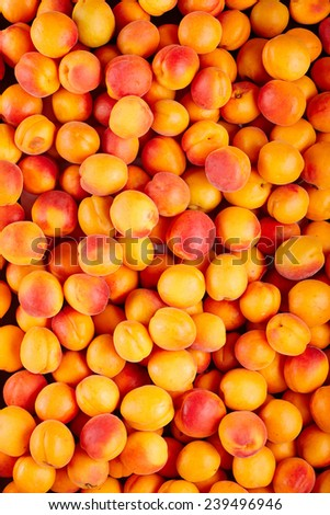 Background of many ripe apricots - stock photo