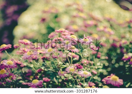 Background of many small flowers of chrysanthemum ,vintage