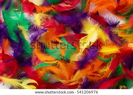 background of multi coloured feathers close up