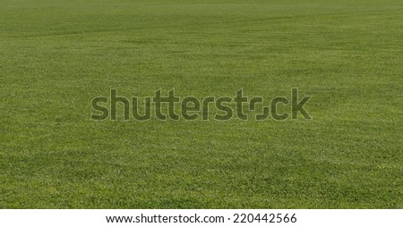 Background of natural green trimmed grass field  - stock photo
