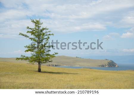 Background of nature image Alone pine tree on empty field on mountain lake Baikal and cloudy sky background Reflection on water texture Copy space for inscription  - stock photo