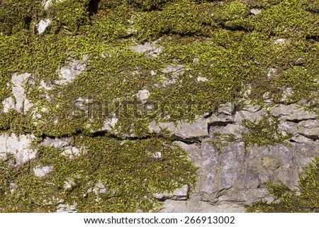 Background of old stone wall texture with moss - stock photo