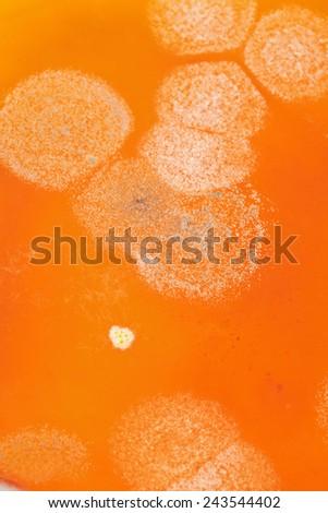 Background of orange mold fungus, close up - stock photo