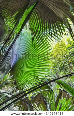 Background of palm leaves in the jungle on the island of Phuket in Thailand - stock photo