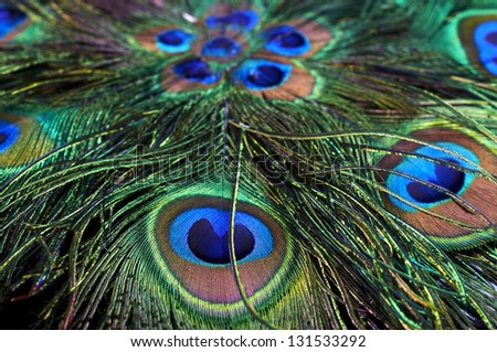 Background of peacock feathers
