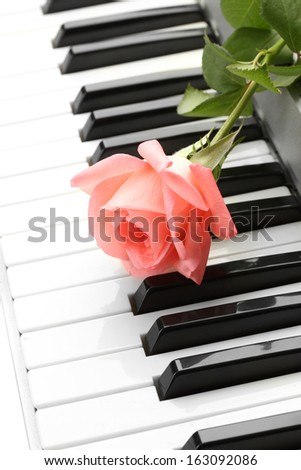 background of piano keyboard with rose - stock photo