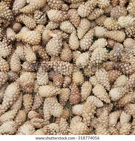 Background of pine cones. Seamless image - stock photo