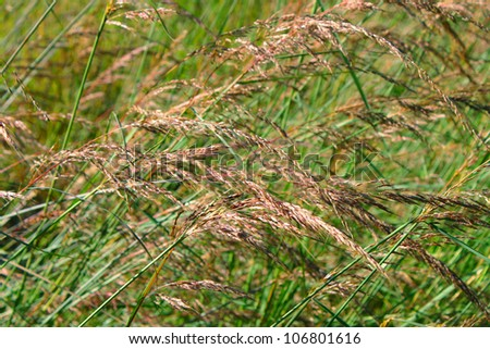 Background of prairie grasses in Castle Rock State Park of Illinois - stock photo