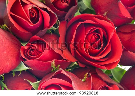 background of red rose - stock photo