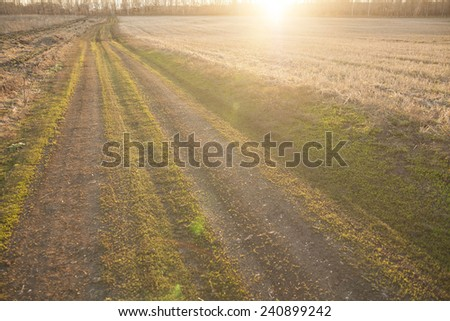 Background of red sunset over rural textured land road near yellow reap summer or autumn wheat harvest dry field against trees forest backdrop  - stock photo