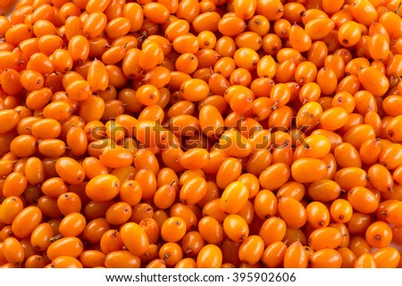 Background of ripe berries of sea buckthorn. - stock photo