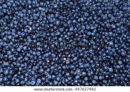 Background of ripe blueberries Ukraine