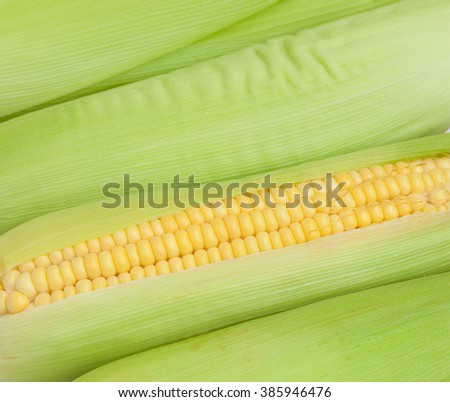 Background of ripe corn
